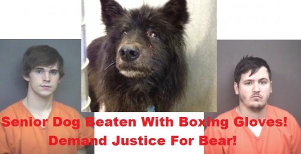 Zwei Männer verhaftet, die einen 12 Jahre alten Hund mit Boxhandschuhen blutig schlugen – bitte Petition unterzeichnen!