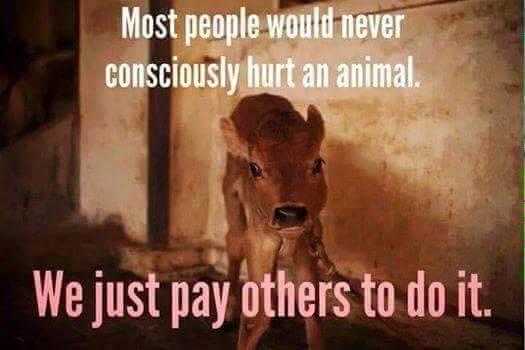 Die meisten Leute würden wohl selbst nie ein Tier verletzen. Sie bezahlen einfach andere dafür, es zu tun.