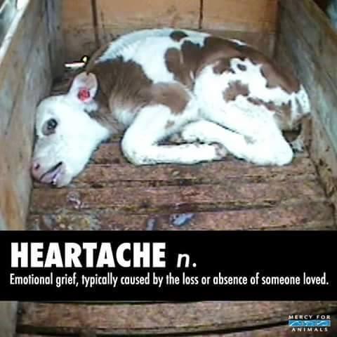 Ein Opfer von Milliarden Mitgeschöpfen, die Omnivoren, Vegetariern, Flexitariern und denen, die ihre Haustiere mit Fleisch füttern, zum Opfer fallen