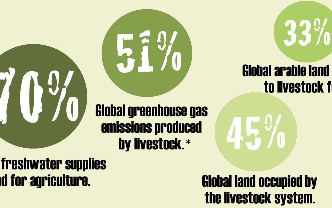 Der Konsum von Tierprodukten ruiniert die Erde