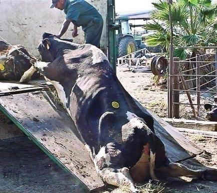 """Ist das nicht eine Schande, wie """"Nutztiere"""" behandelt werden?"""