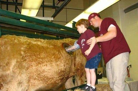 """Petition: Europaweites Verbot von """"Kühen mit Löchern"""""""