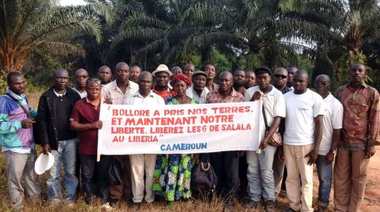 Landraub wegen Palmölplantagen – bitte protestieren!