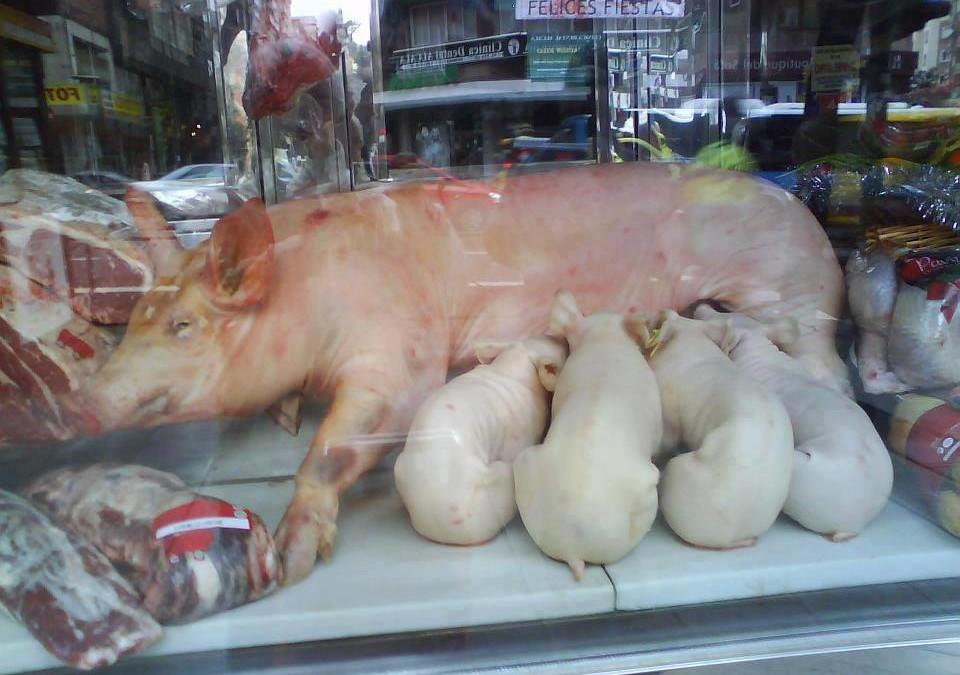 """Erstaunlich sind nicht so sehr die Perversionen der Fleischindustrie, sondern der Umstand, dass die Konsumenten (inklusive der fleischessenden und fleischfütternden Tier""""schützer"""") trotzdem weiterhin die Verbrechen an den Tieren finanzieren"""