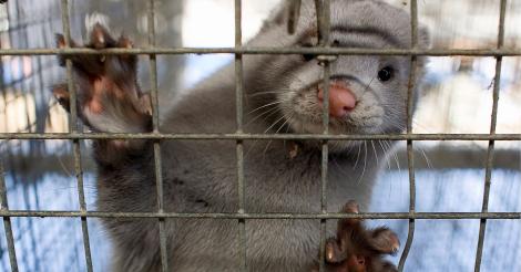 WDR-Film: Die Wahrheit über Pelz