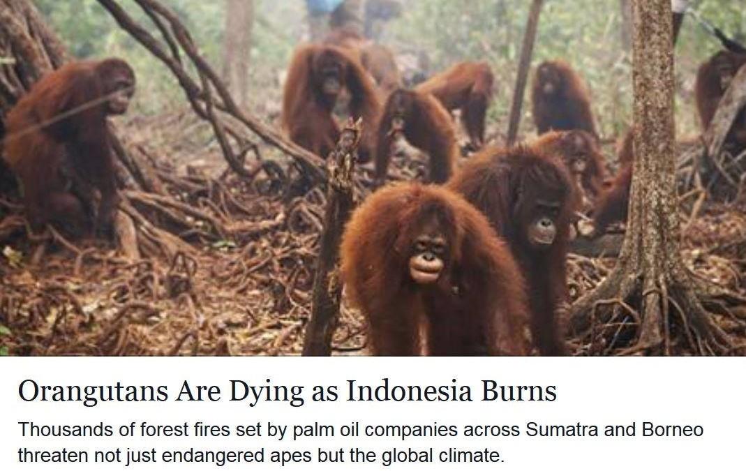 Fassungslos! Indonesien brennt für Palmöl