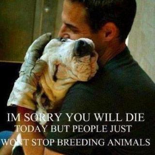 """""""Es tut mir leid, dass Du heute sterben wirst, aber die Leute hören nicht damit auf, Tiere zu züchten"""""""