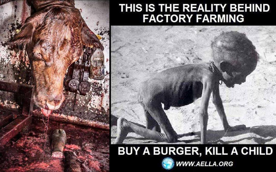 Wer ist für das grausame Schicksal der Tiere und der hungernden Menschen verantwortlich?