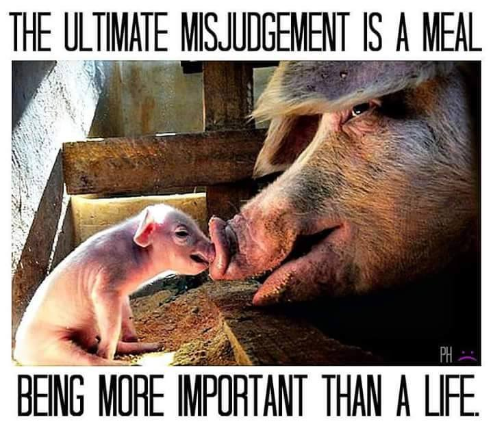 """""""Die ultimative (intellektuelle und moralische) Fehleinschätzung ist, eine Mahlzeit sei wichtiger als ein Leben."""""""