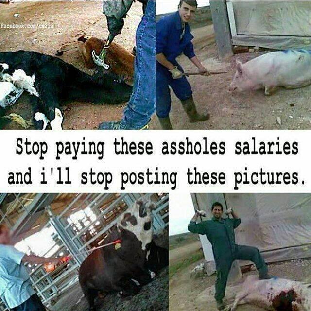 Solange Menschen Fleisch, Fisch, Eier und Milchprodukte konsumieren und ihre Haustiere mit Fleisch füttern, wird es diese Bilder geben