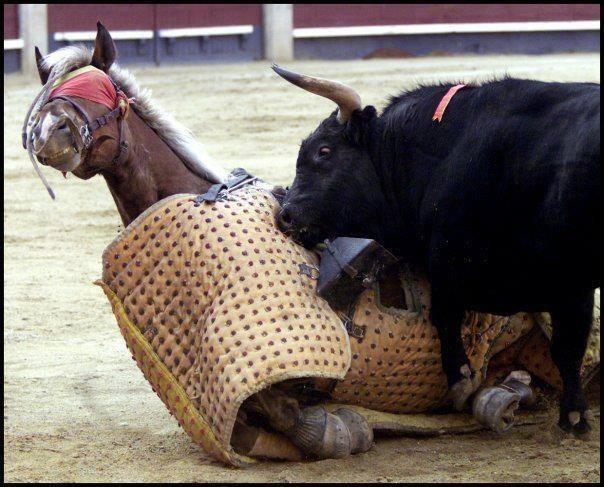 Bist Du gegen Tierquälerei?