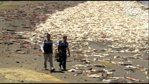Die Ozeane sterben – erst werden sie ausgeplündert, dann werden sie zur Müllhalde