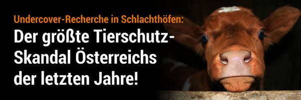 """Der größte Tierschutz-Skandal in Österreich"""" zeigt den ganz normalen üblichen Wahnsinn in den Schlachthäusern dieser Welt"""