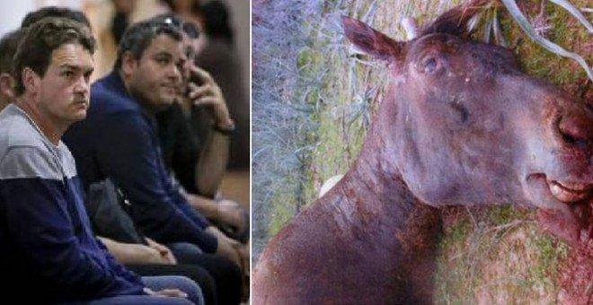 Eugenio Sánchez wurde zu einer Haftstrafe verurteilt, weil er sein Pferd Sorky mit einer Eisenstange zu Tode prügelte – das wirft zwei wichtige Fragen auf: