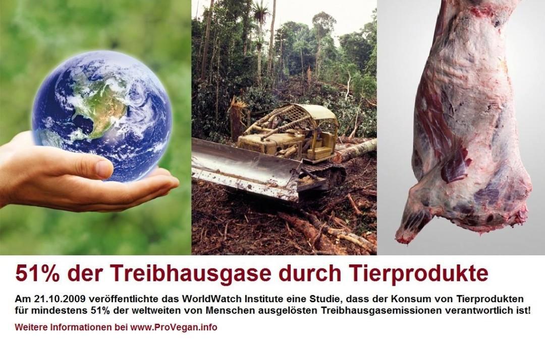 51 % der Treibhausgase durch Tierindustrie