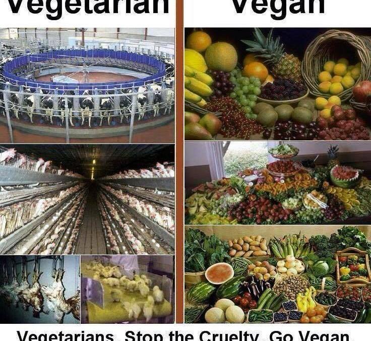 Unterschied zwischen vegan und vegetarier