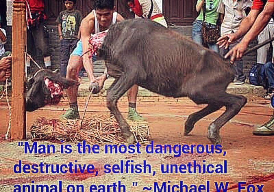 """""""Der Mensch ist das gefährlichste, zerstörerischste, egoistischste und unmoralischste Tier auf der Erde."""" – Michael W. Fox"""