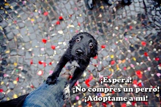 Warte! Kauf keinen Hund! Adoptiere mich!