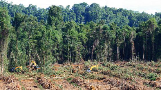 Agroindustrie greift nach Papua