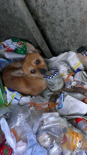Unbekannte(r) wirft kleine Mischlingshündin auf dem Autobahnrastplatz Gerlinger Höhe in einen Müllcontainer