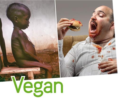 Bewusster Fleisch essen? Schritt für Schritt Tierprodukte reduzieren?
