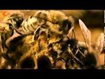 Bienen und Bienensterben