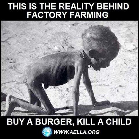 Die Realität hinter der Tierindustrie – kauf Fleisch und Milch, und Du tötest ein Kind