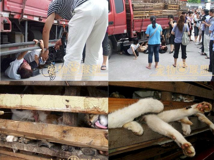 Respekt vor chinesischen Tierschutzaktivisten