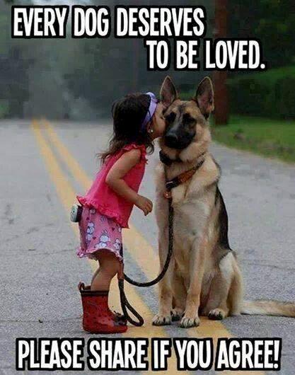 Die Aussage auf dem schönen Bild ist nur ein Teil der Wahrheit: Jedes Tier verdient geliebt zu werden!