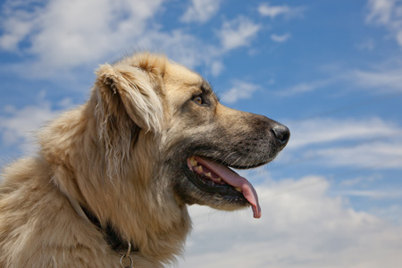 Neue Ernährungsberichte mit Bildern von 7 vegan ernährten Hunden und 6 vegan ernährten Katzen aus Spanien!