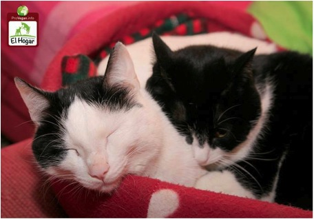 Willst du mehr über die Krankheit FUS bei Katzen erfahren?