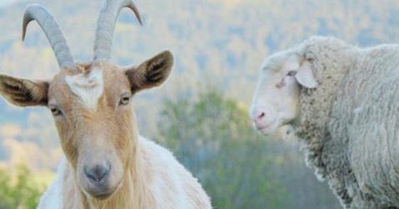 Erdlingshof – unterstützenswerter Tierrettungshof von Johannes Jung