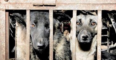 FDP will Hunde zum Schlachten freigeben