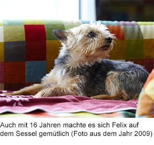 Felix (* 27.07.1993  † 25.07.2012) war der Grund für ProVegan