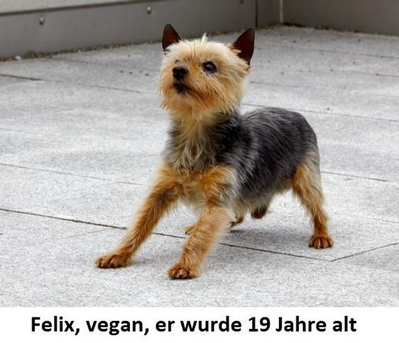 Felix, vegan, er wurde 19 Jahre alt