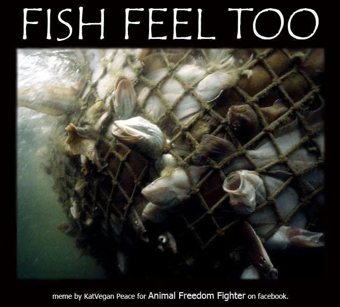 Fische fühlen Schmerz