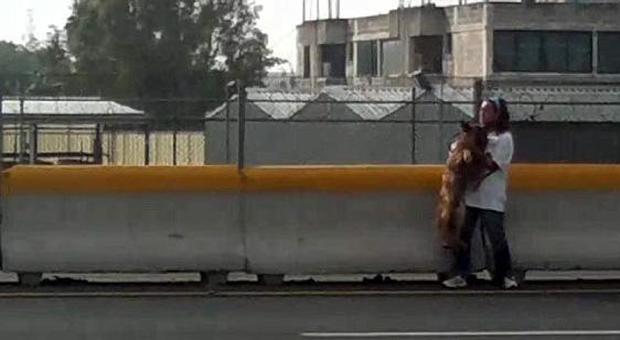 Mutige Frau riskiert ihr Leben, um einen angefahrenen Schäferhund von einer Schnellstrasse zu retten
