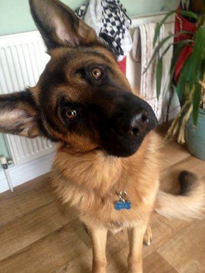Gutes Zuhause gesucht – Meine Freundin mag meinen Hund nicht. Deshalb wende ich mich jetzt an Sie!