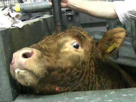 Die Fütterung von Fleisch an Haustiere ist Tierquälerei