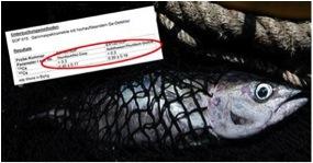 """""""In Schweizer Läden gibts Fukushima-Fisch"""""""