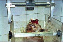 Andreas Kreiter, einer der schlimmsten Tierexperimentatoren, darf laut einem Urteil unfähiger und/oder unmoralischer Richter weiter Affen foltern