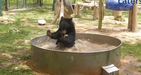 Kennen Sie jemanden, der mit mehr Vergnügen als Georges badet?
