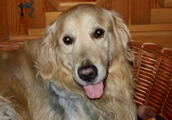 """Jäger schleift 8 Jahre alten und herzkranken Hund vorsätzlich mit seinem Auto fast zu Tode – Gericht verhängt wieder Bagatellstrafe """"wegen roher und quälerischer Tiermisshandlung"""""""