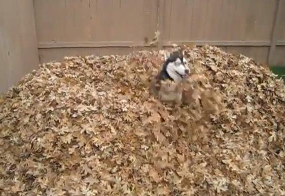 Ein glücklicher Hund voller Energie – Doping oder vegane Fütterung?