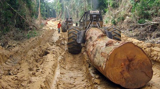 Die blutigen Holz-Importe in die EU