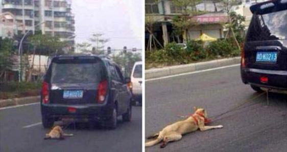 Unfassbar – Zheng Weiyang schleift Hund hinter dem Auto her, weil er ihn loswerden will