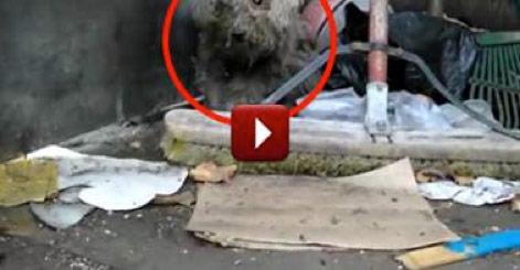 Sehenswertes Video: Eine Rettung eines blinden Hundes von einem Müllhaufen