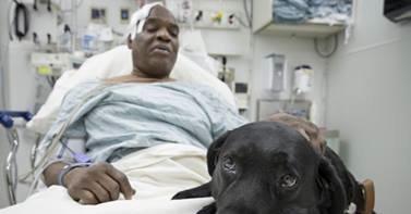 """""""Der Hund hat mein Leben gerettet. Ich bin überwältigt"""""""