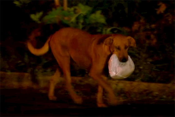 Ein Hund, von dem wir soziales Verhalten lernen können – sehr eindrucksvoll