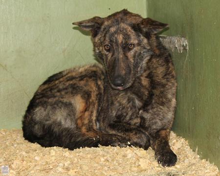 Rettet Hunde aus Tötungsstationen und Tierheimen!